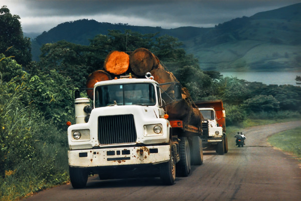 Old Trucks transporting Mahogany Trunks on the Pan-American Highway, Costa Rica, 1996. Analogue Shot